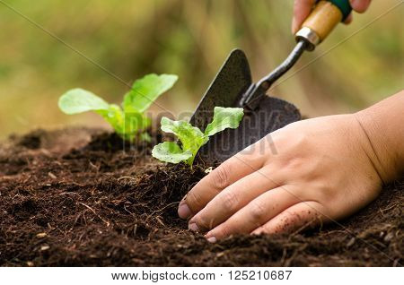 Farmer planting sapling into soil over sunlight in morning time