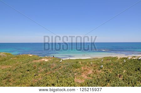 Elevated scenic view overlooking the turquoise Indian Ocean seascape with vegetated dunes at Penguin Island in Rockingham, Western Australia.