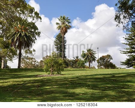Tropical landscape with the green flora at the King's Park botanic gardens in Perth, Western Australia.
