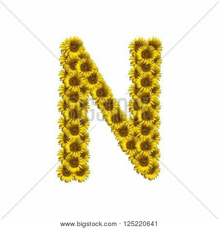 Sunflower alphabet isolated on white background, letter N
