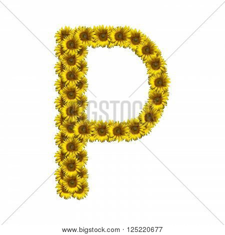 Sunflower alphabet isolated on white background, letter P