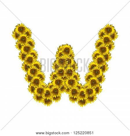 Sunflower alphabet isolated on white background letter W
