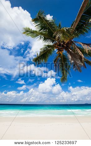 Stunning tropical beach on Mahe island in Seychelles
