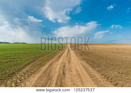 Cultivated green meadow. Rural scene. Country road under blue sky
