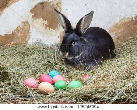 On the hay lies rabbit near the Easter eggs