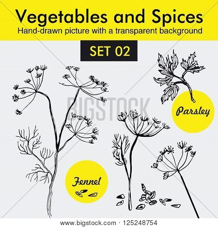 Vegetables and Spices Organic Set. Vector spices and Vegetables Hand Draw illustrations. Vegetables and Spices sketches. Officinale plants. Botanical illustrations.