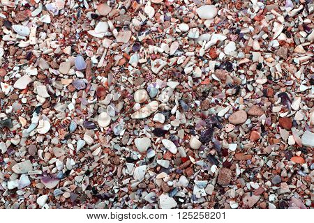 The remains of thousands of shellfish lie among the pebbles on this stony beach