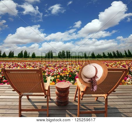 Two convenient chaise lounges stand on a roadside on wooden scaffold. The elegant women's hat hangs on one of them. The huge field of flowers in the kibbutz on border with Gaza Strip