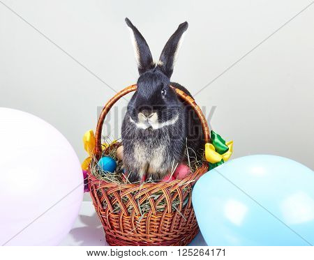 On Easter basket decoration the balloons is sitting rabbit