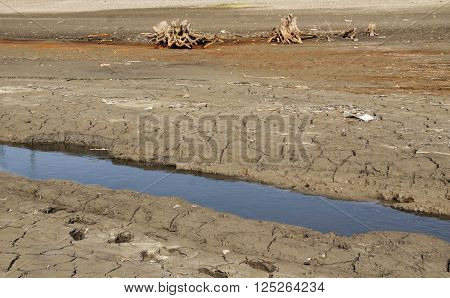 brook flowing through the bare landscape with some dead stumps during the times of drought