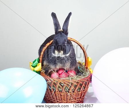 Rabbit sitting on a basket with Easter eggs
