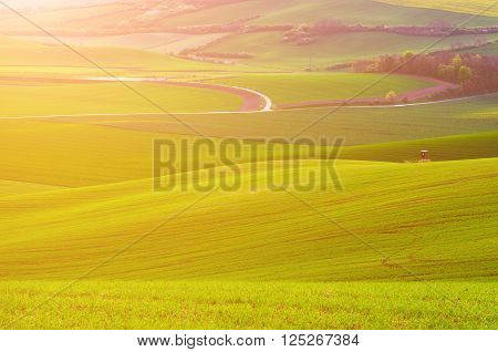 Rural sunny landscape with green grass field and wooden hunting shack , South Moravia, Czech Republic