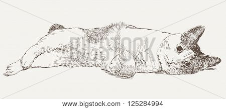 Vector drawing of a domestic lazy cat.