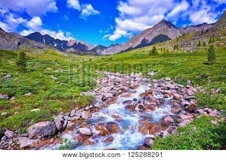 Primordial nature of Eastern Siberia. Alpine Meadows Siberian highlands . Buryatia . Russia