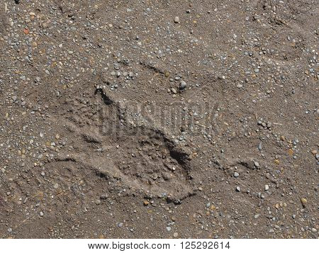 small granite gray and brown old gravel to mud and indented marks from shoes