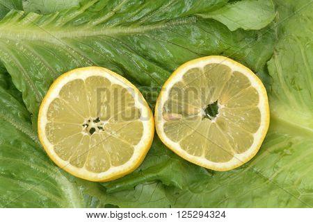 two lemon slices on romaine lettuce food concept