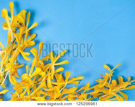 Yellow Mokara Orchids in a Blue background. (picture with space for text)