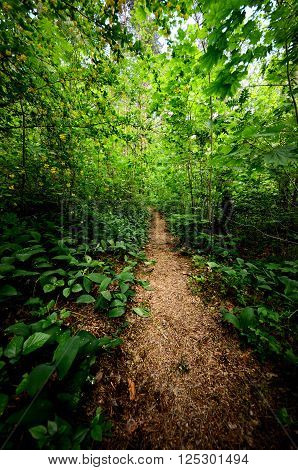 Footpath through a mysterious dark deciduous forest