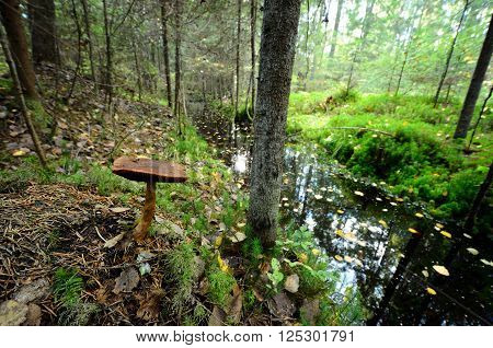 Mushroom growing in moss next to a forest river