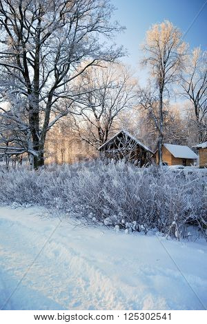 Countryside cottage surrounded by snowcovered trees and bushes
