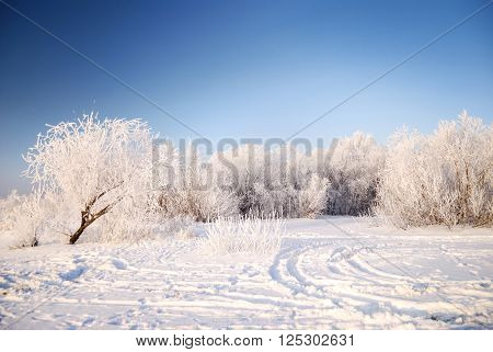 Snowcovered trees and bushes with hoarfrost. Winter landscape.
