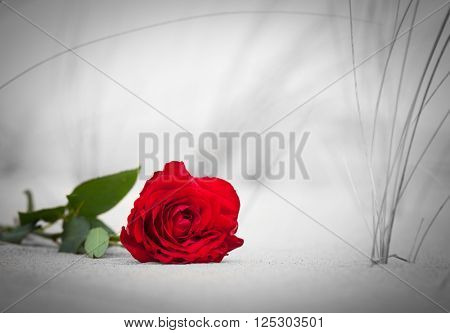Red rose lying on sand on the beach.. Concept of romantic love, romance, but may also symbolize a loss, melancholy, memory of the past etc.  Color against black and white