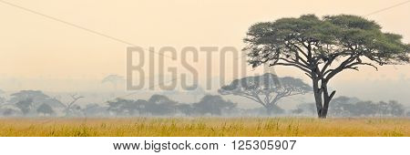 Beautiful Scene Of Serengeti National Park