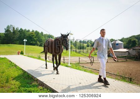 Stableman leads the horse in a stable summer day