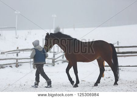 Stableman leads the horse in a stable at winter fog