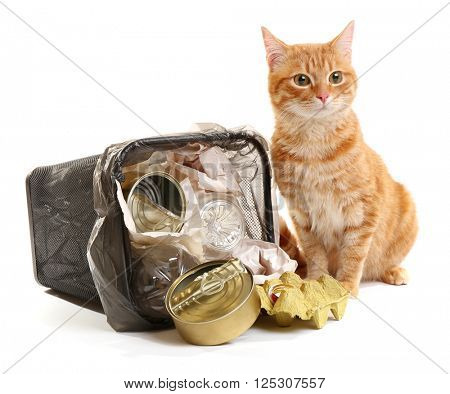 Red cat near full inverted garbage basket, isolated on white