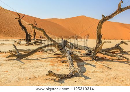 Deadvlei or Dead Vlei , a depression characterized by a layer of white sand located about 2 km by road from Sossusvlei. Namib-Naukluft National Park, Namibia.