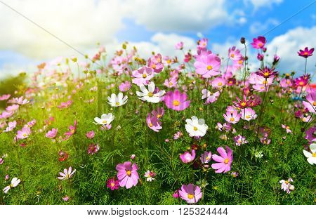 Spring flowers meadow. Shallow deep focus