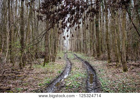 Forest and foliage in autumn and mud track path in it