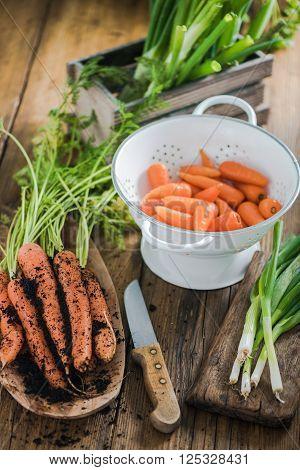 Spring Carrot Straight From Garden