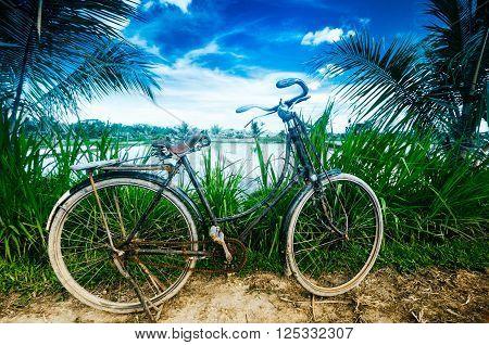 Rice Fields. Bali, Indonesia