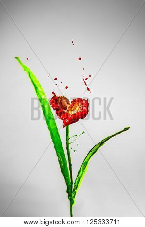 Lily flower made of red and green bursting paint on a gry background