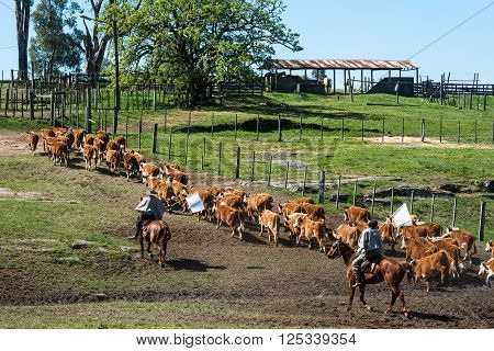 Gauchos in the campo, Tacuarembo province, Uruguay