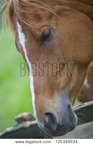 Brown horse at a fence, rural countryside