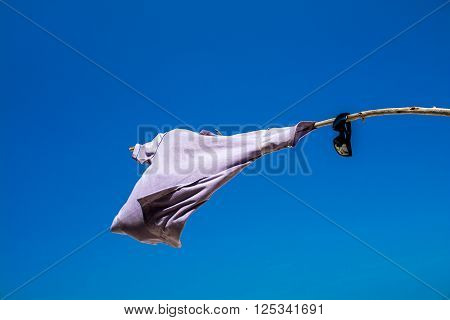 T-shirt and sunglasses hanging on branch in blue sky background