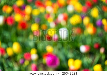 Colorful Out Of Focus Background