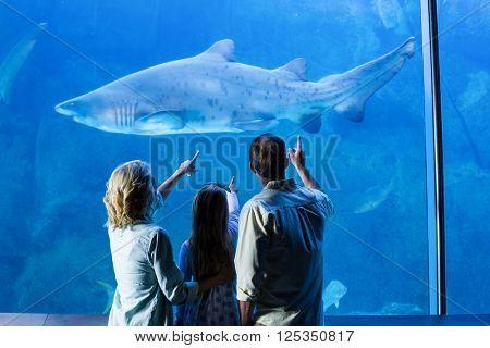 Rear view of family pointing at shark in a tank at the aquarium
