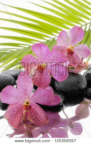 Branch orchid and wet black stones with palm