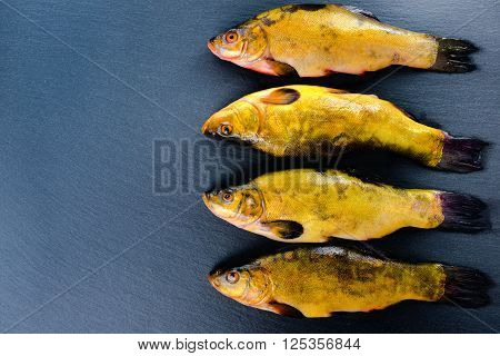 high angle view of fresh tench fish on slate background close up