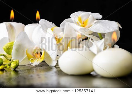 beautiful spa decoration of blooming white orchid flower phalaenopsis with dew and candles on black background close up