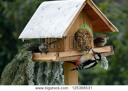 Birdhouse with great spotted woodpecker and two sparrows