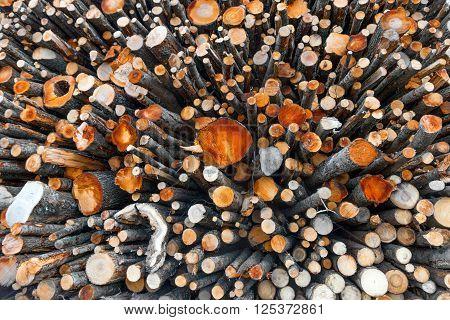 big stack of logs of trees in lumberyard