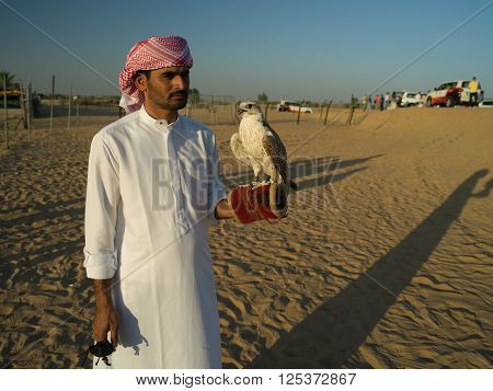 NOV 30 -DUBAI UAE: bedouin Arab with a tame falcon posing for the tourists on the 30 of november 2013 in DubaiUAE
