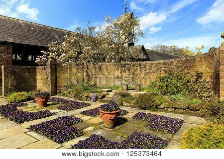 Flagged English garden with violas and a magnolia tree.