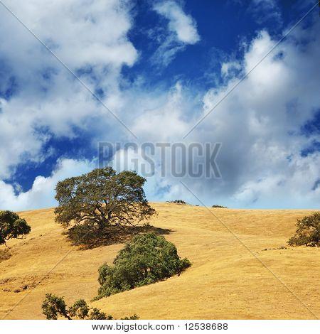 Trees On Hills