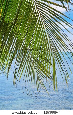 Tropical Palm Leaf Against A Tranquil Sea